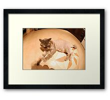 360 Cat Framed Print