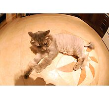 360 Cat Photographic Print