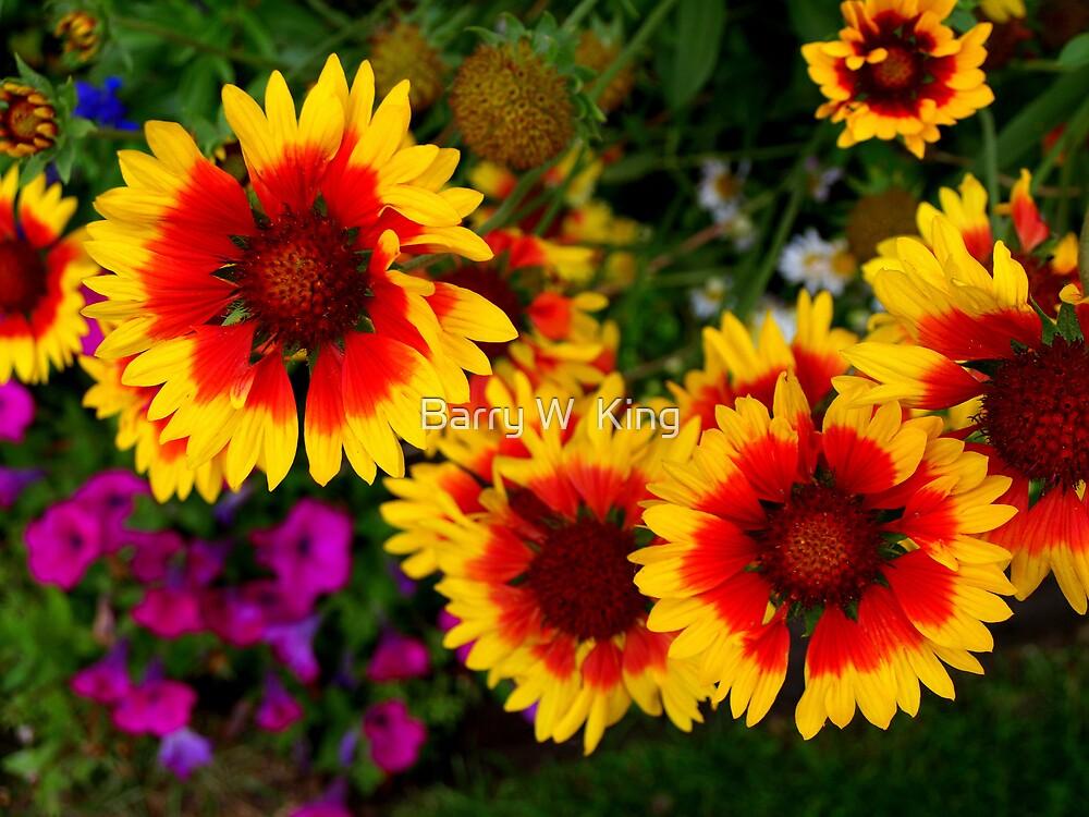 Jackson Park Flowers 2 - Queen Elizabeth II Sunken Gardens by Barry W  King