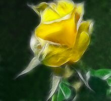 Yellow Rose 2 Intense by Christopher Johnson