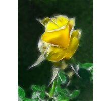 Yellow Rose 2 Intense Photographic Print