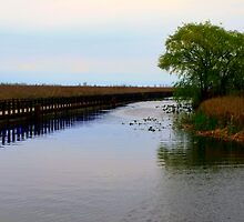 Boardwalk and Marsh 2 by Barry W  King