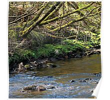 River and Trees Landscape Poster