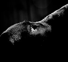 Sweet Thing in BW by Jenny Ryan