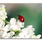 Spring has come! by Ellen van Deelen