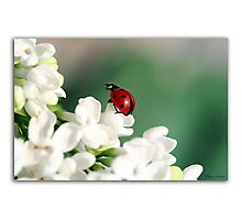 Spring has come! Photographic Print