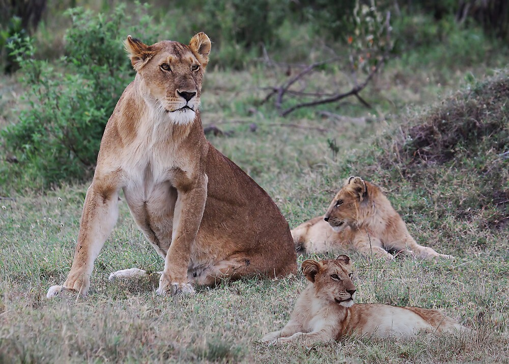 PROUD MOTHER - KENYA by Michael Sheridan