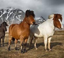 In Good Company by Andreas Mueller