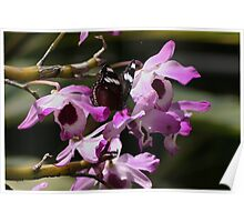Orchid Delight Poster