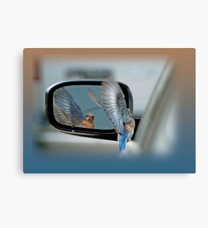 Bluebird in my Rear View Mirror Canvas Print