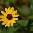 A Bit of Sunshine by Virginia N. Fred