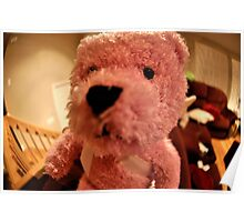 Funny Teddy Pink Bear Poster