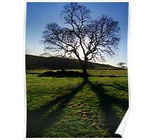 cloverleaf tree Poster
