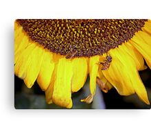 Long life, bees..Long life, humans Canvas Print