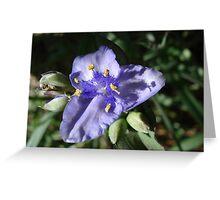 Tradescantia hirsuticaulis- Hairy Flower Spiderwort Bush Greeting Card