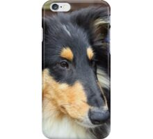 Rough Collie III iPhone Case/Skin