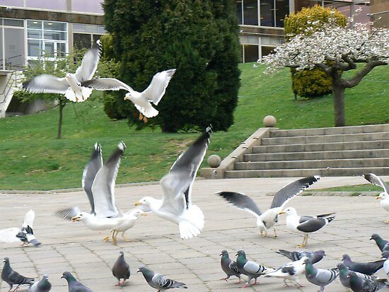 Seagulls among the pigeons by Andrew  Wakelin