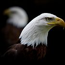 Double Eagles by Sharon Morris