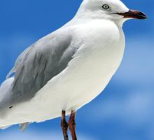 Rottnest Seagull Sticker