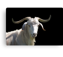Portrait of a Horned Goat Grazing Vector Canvas Print