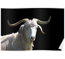 Portrait of a Horned Goat Grazing Vector Poster