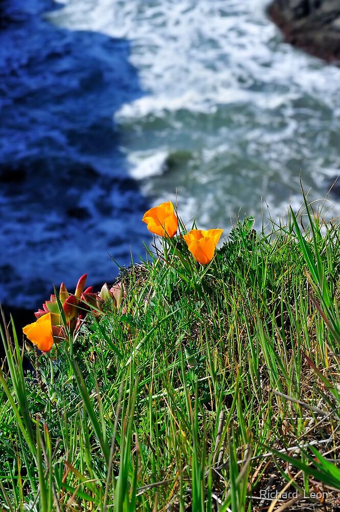 Marin Headlands  •  California by Richard  Leon