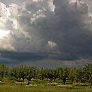 Moody Sky by sundawg7