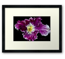 a Tulip with a Picasso touch.. Framed Print