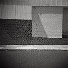 Anemone Wall by Haydn Williams