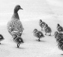 Follow me, kids! by Sue Morgan