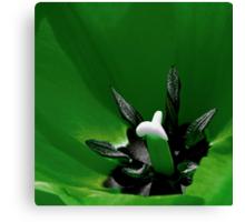 Green Tulip Macro Canvas Print