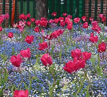 Victoria Park flowers by Lillie Halton