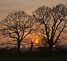 Sunset Through the Trees by Paul Hutchinson