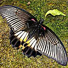 """ Butterfly"" by Malcolm Chant"