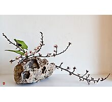 Ikebana-109 Photographic Print