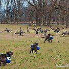 Duck Duck Goose by JeniGoci