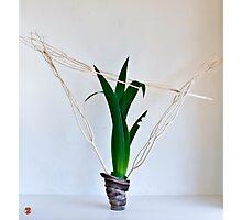 Ikebana-115 Photographic Print