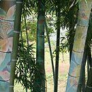 Bijou bamboo by Jenny Hall