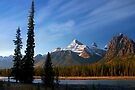 Icefields Parkway National Park, Lodgepole Pine and river, Alberta, Canada. by PhotosEcosse