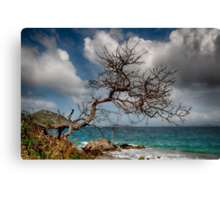 The Tree At The Cay Canvas Print