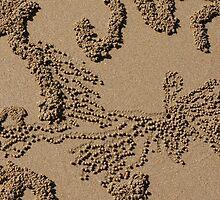 Crab Patterns by Jan  Harrison