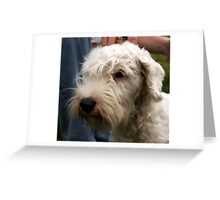 face of a Sealyham Terrier Greeting Card