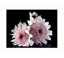 Miniature Dahlias Art Print
