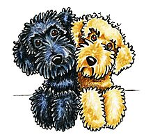 Black Yellow Labradoodles Lined Up Photographic Print