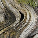 Root Swirls by Tracy Wazny
