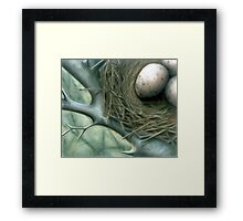 Bird Nest Framed Print