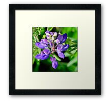 Marin Headlands  •  Lavendar Flower  •   California Framed Print