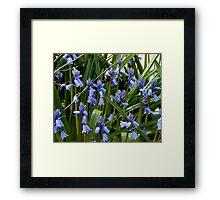 A Bee Among The Flowers Framed Print