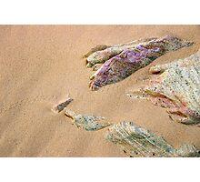 Lizard Tracks Photographic Print