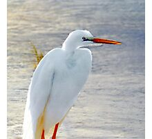 White Heron Photographic Print